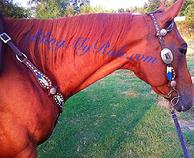 Hand tooled and pianted feather set with single ear headstall and buckstitch.