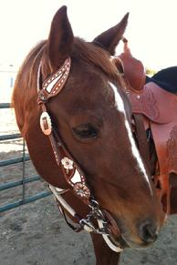 Hand tooled, painted and buckstitched single ear headstall.